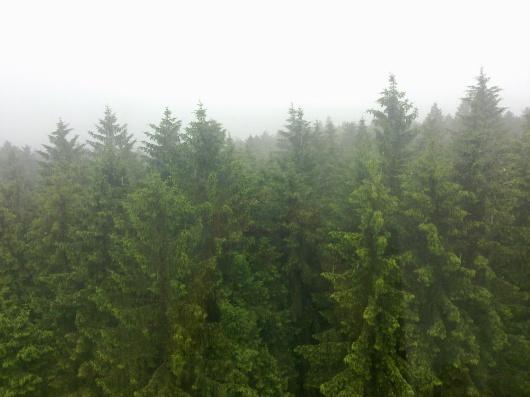 Hutan dilihat dari atas tower