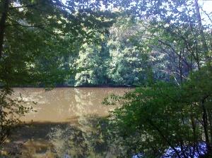 Danau di tengah hutan